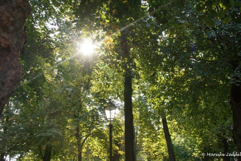 Sonne durch grüne Blätter beim Ratzeburger Dom