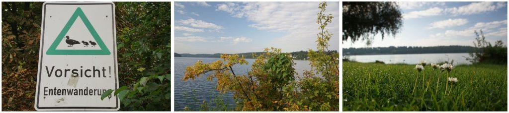 drei Fotos: Schild Entenwanderung, Küchesee, Blick auf Ratzeburg