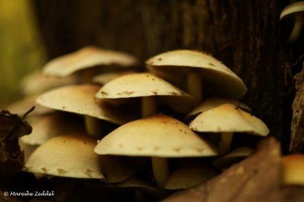 Viele kleine Pilze an einem Baum im Wald