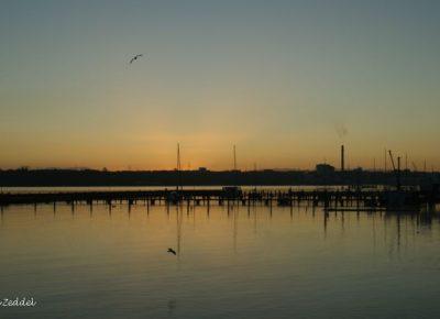 Möwen und Boote am Morgen in Kiel