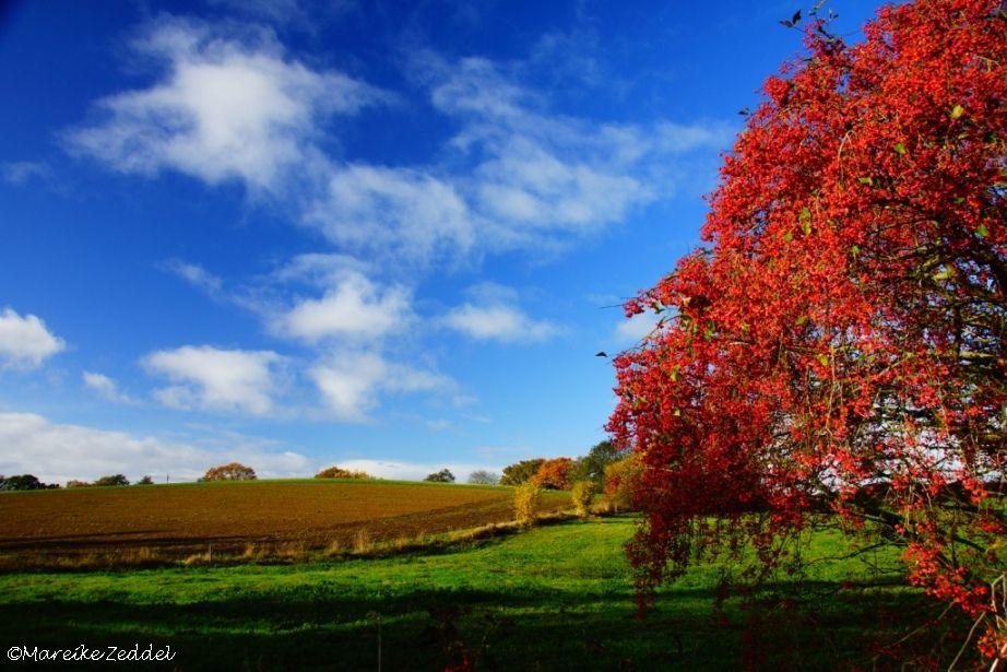 Herbstlaub und Äcker im Herbst